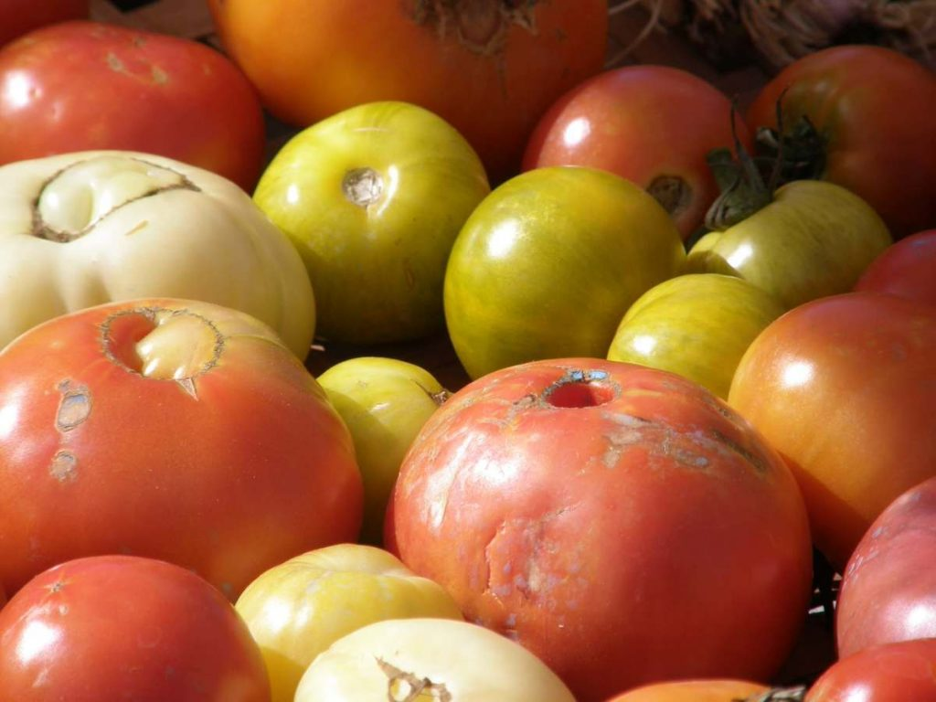 tomates camping les cerisiers